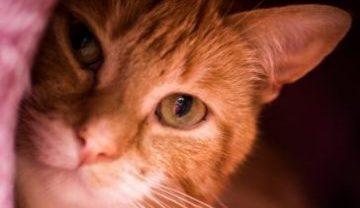 Tarieven van Kattenpension Wel voor de Poes